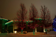 2012-photo-wrapped-trees