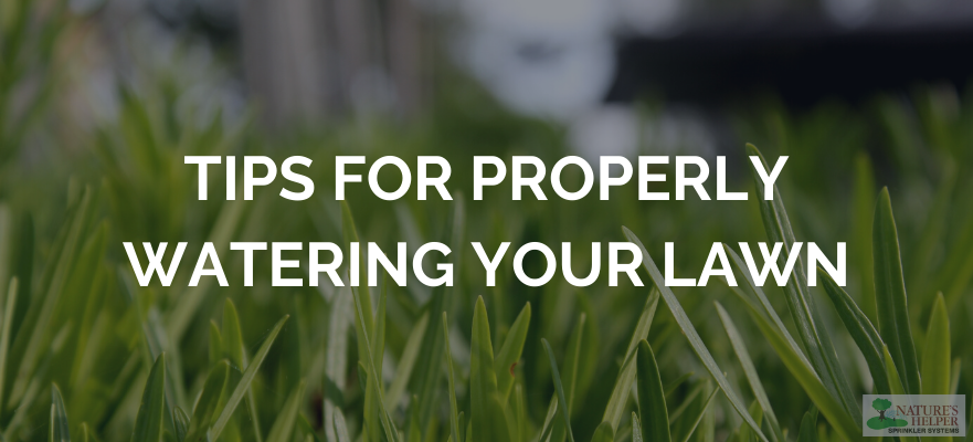 Tips for Properly Watering Your Lawn